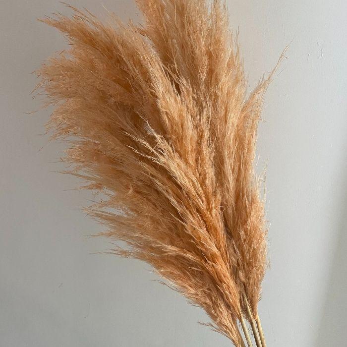 Peach Pampas Grass 110cm