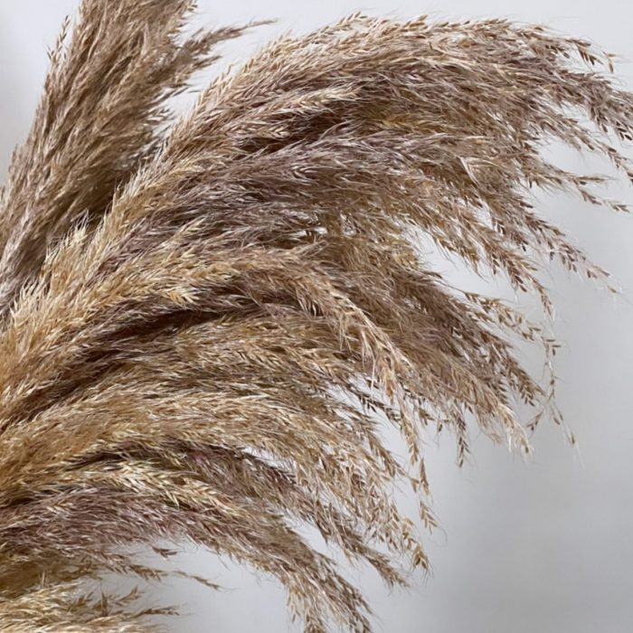 Mixed Toned Pampas Grass 120cm