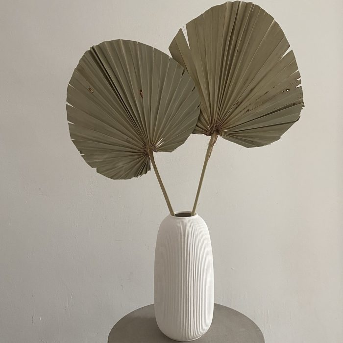 Giant Dried Palm Fan Set