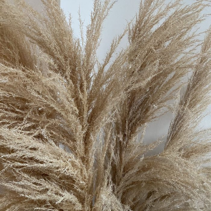 Light Pampas Grass