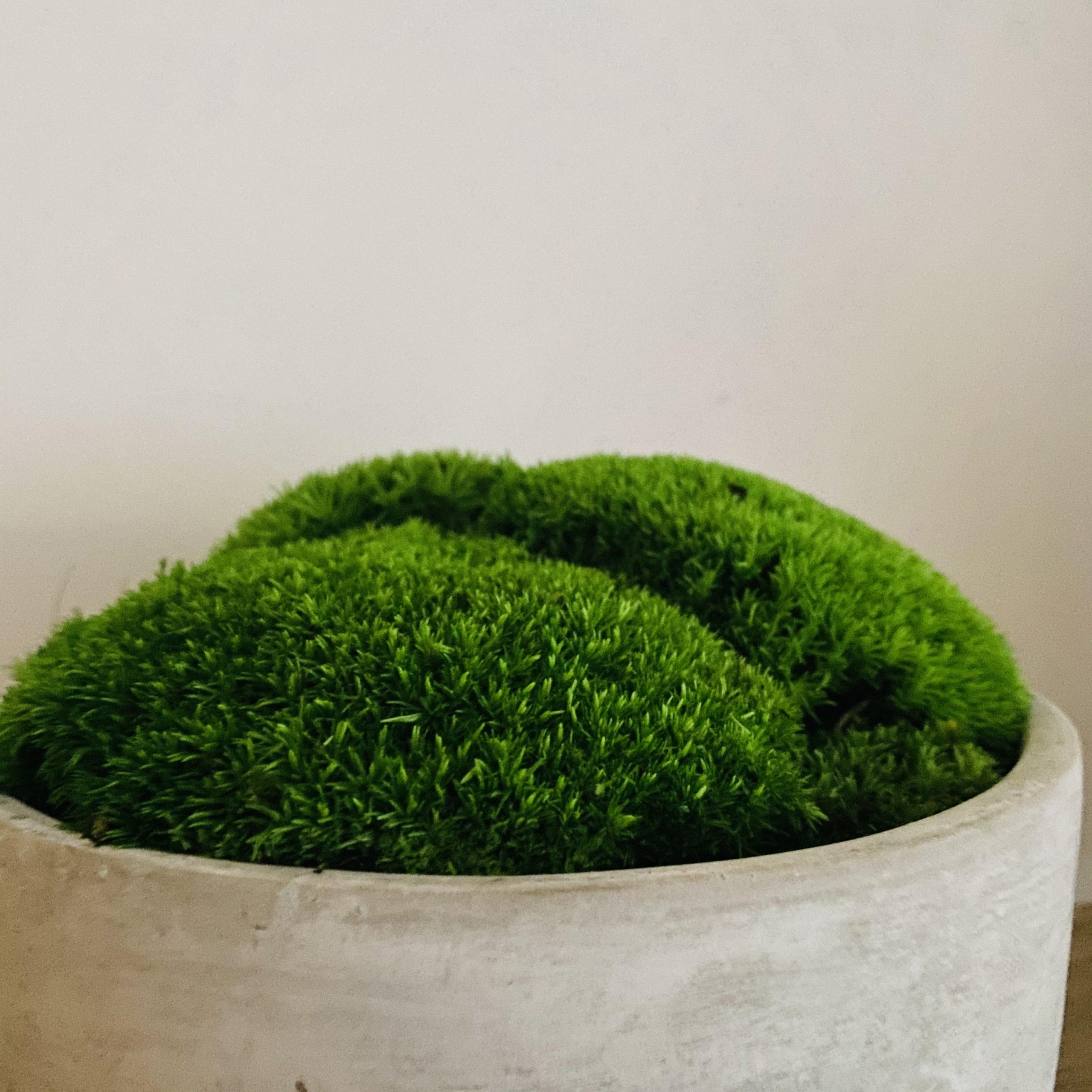 Preserved Moss Bowl