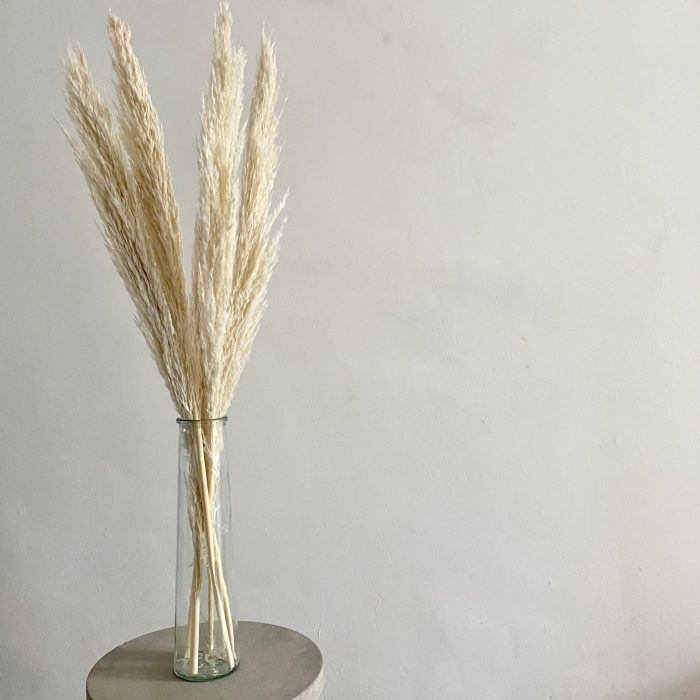 Bleached White Pampas Grass
